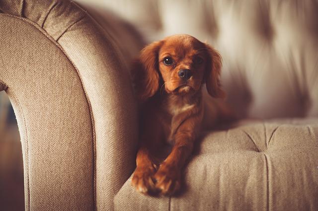 pes na gauči.jpg