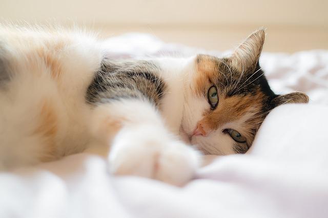 mačka leží v posteli.jpg