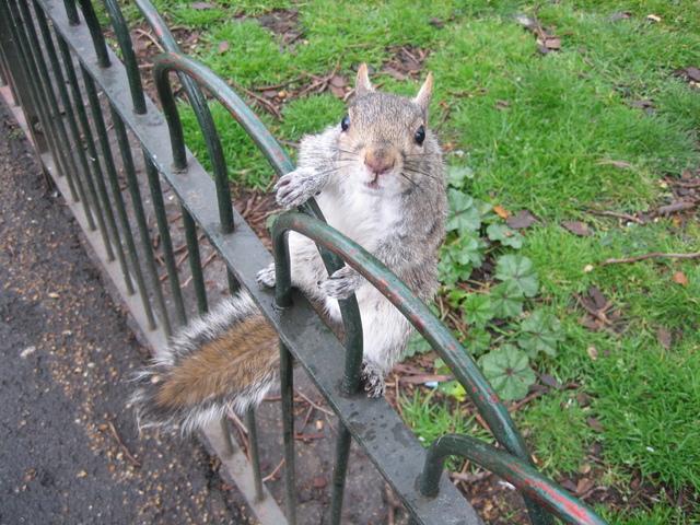 Veverička na kovovom zábradlí.jpg